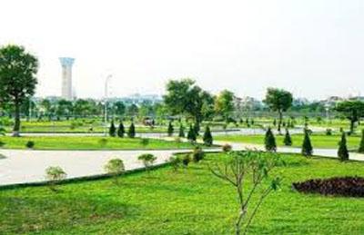 Thi công cảnh quan cây xanh
